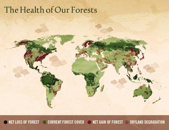 Illegal Logging Map 2