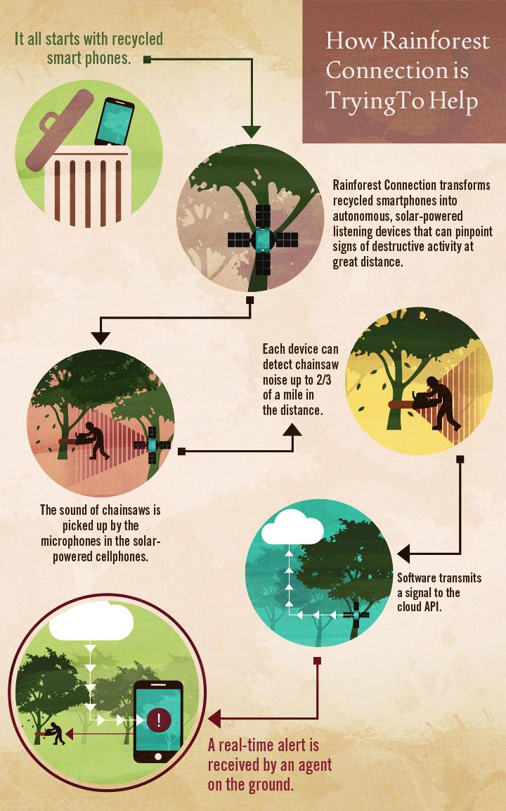 Illegal Logging Map 3