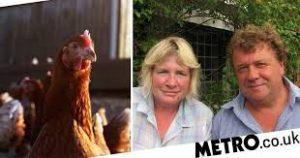 Chicken , happy egg case, DJ Houghton, Ardea